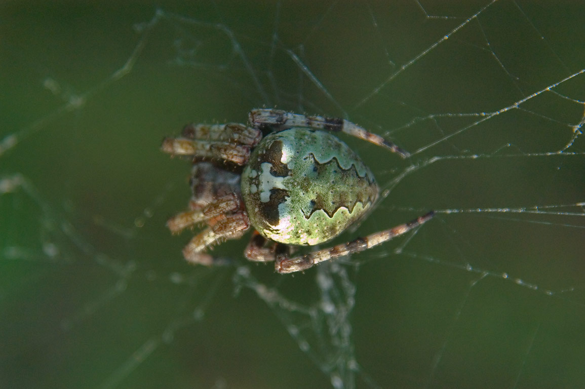 A spider in Lick Creek park. College Station, Texas