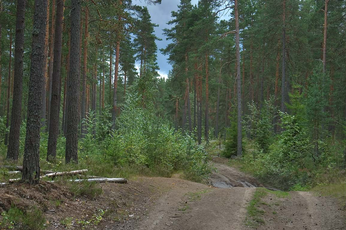 Forest road in Kanneliarvi, 40 miles north-west from St.Petersburg. Russia