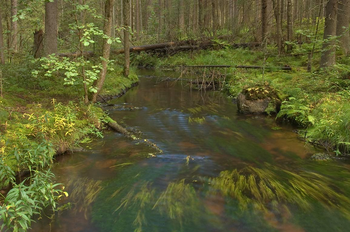 Olonets Creek in a forest between Lembolovo and...miles north from St.Petersburg. Russia