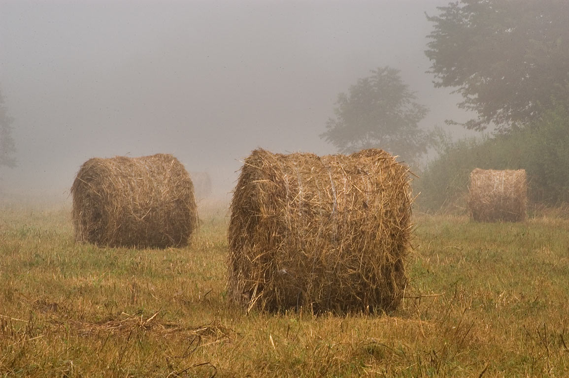 Hay rolls near Loop Trail in Washington-on-the-Brazos Historic Site. Washington, Texas