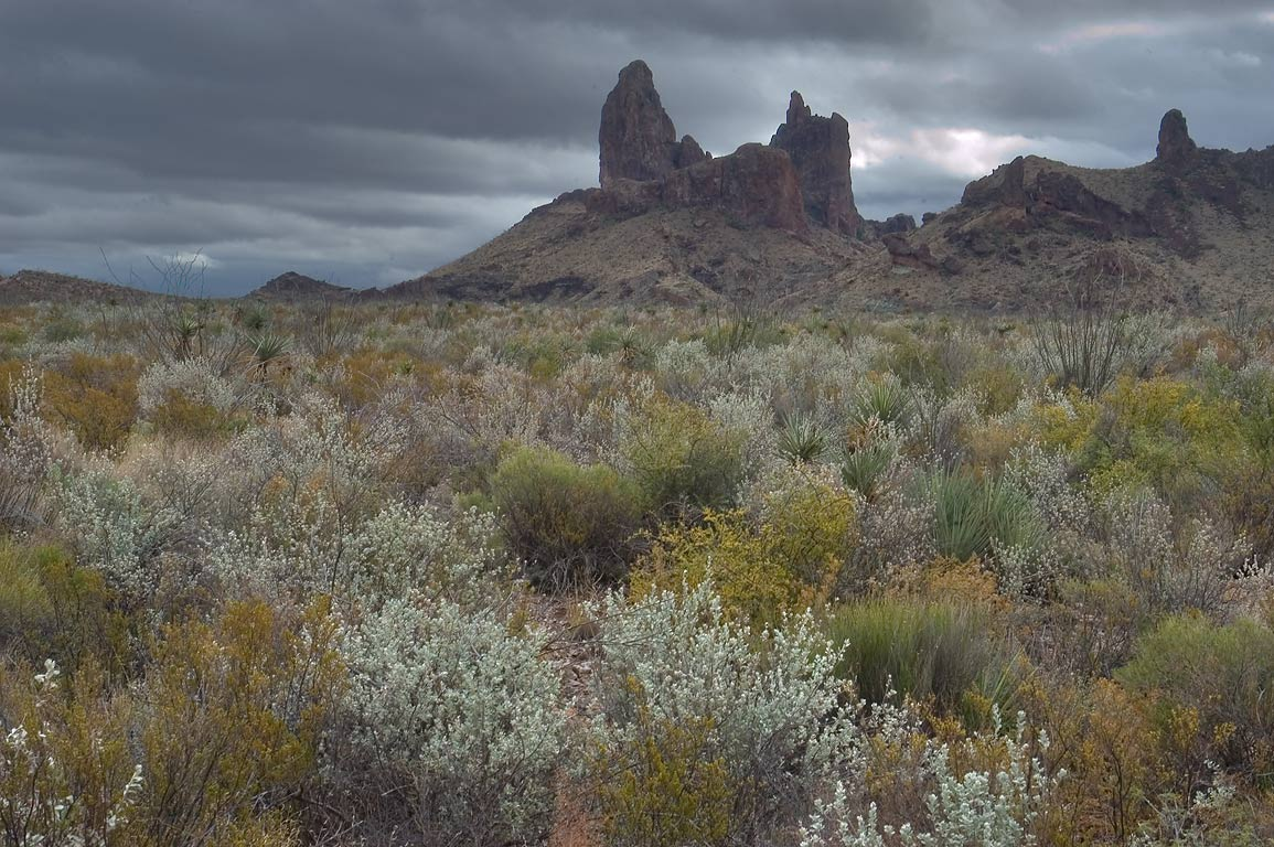 Mule Ear Peaks east from Smokey Creek Trail east...Big Bend National Park, Texas