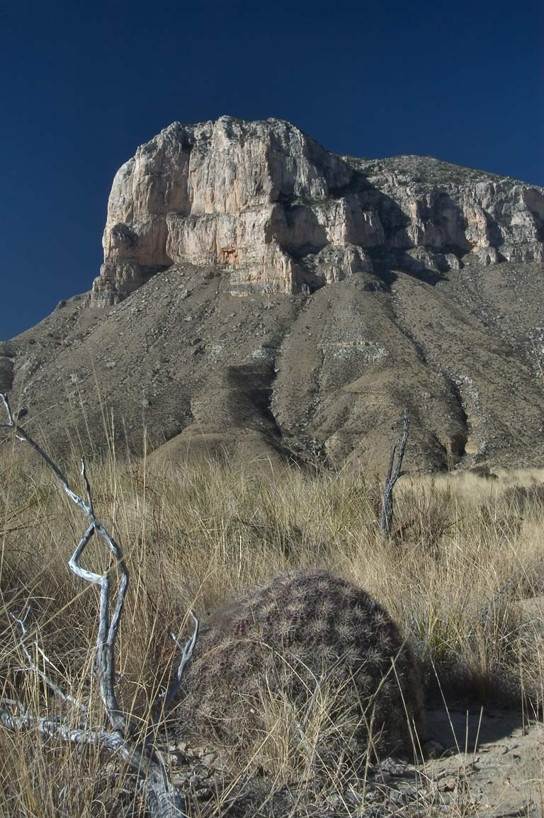 Cushion cactus and El Capitan Mountain from a...Mountains National Park. Texas