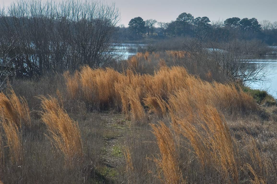 East side of Flag Pond, with old inflorescences...from a loop trail. Somerville, Texas
