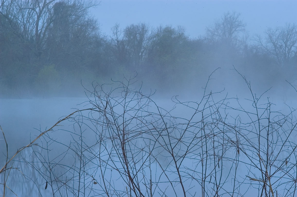 Pond in Washington-on-the-Brazos State Historic Site in fog. Washington, Texas