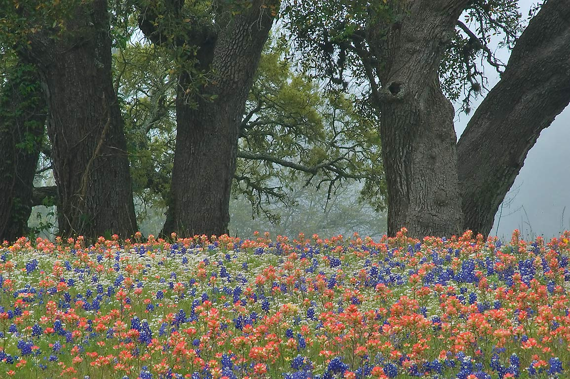 Flowers and trees in Old Baylor Park. Independence, Texas