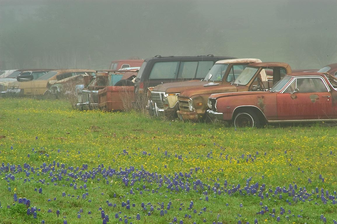 Junk cars in bluebonnet flowers, view from...near Rd. 50. North from Brenham, Texas