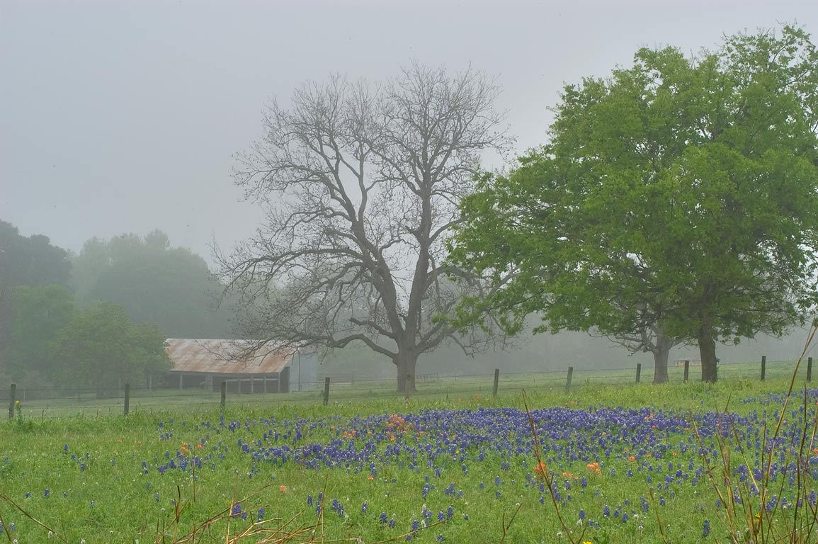 Farm in mist, view from Old Navasota Rd., near...Hill Rd.. North from Brenham, Texas