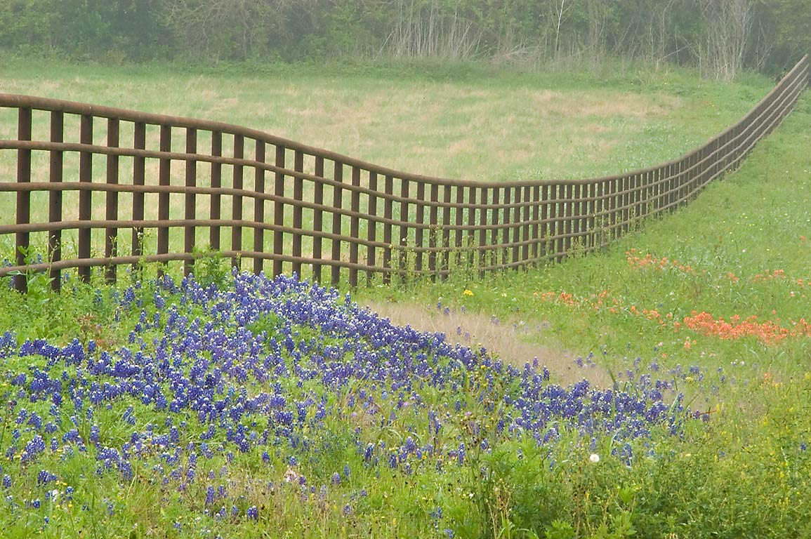 Fence of Triple T Ranch and bluebonnet flowers...School Lane. East from Brenham, Texas