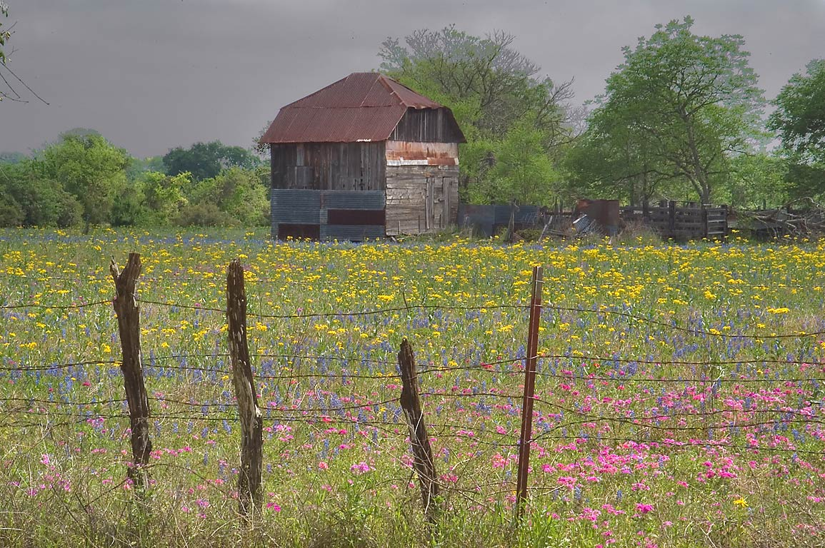 Shack and flowers at Allwise Rd., near Old Plantation Rd.. East from Brenham, Texas