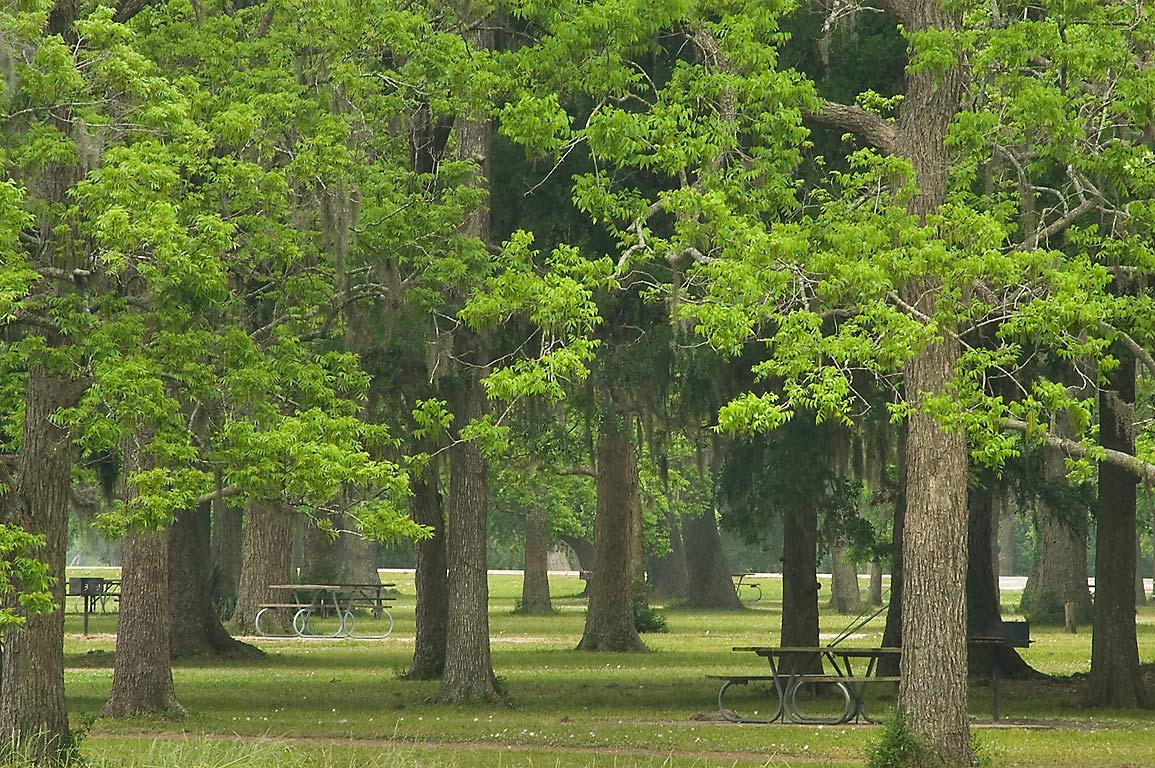 Picnic place on north shore of Elm Lake in Brazos Bend State Park. Needville, Texas