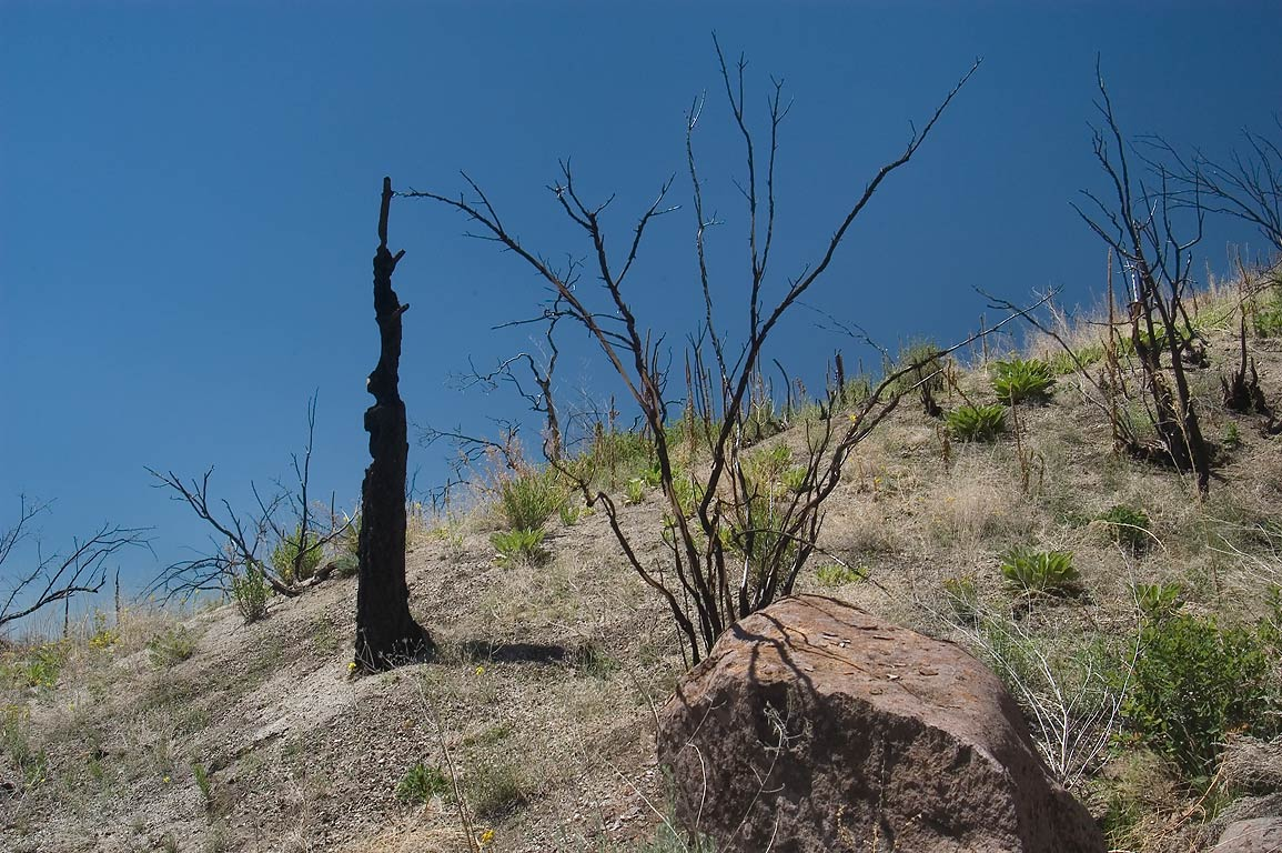 Burned forest of upper Hondo Canyon west from...Monument. New Mexico, near Los Alamos