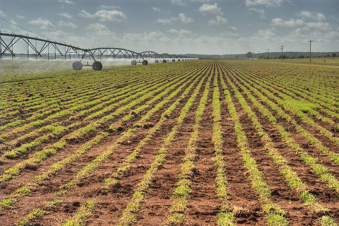 Watering agricaltural field near Rd. 50, view from CR 443 north from Independence. Texas