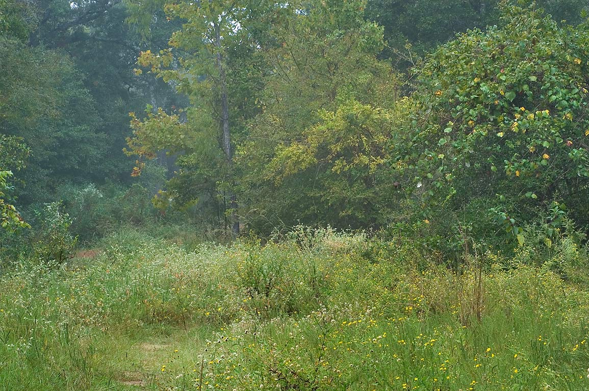 Sewage line right of way in Lick Creek Park. College Station, Texas