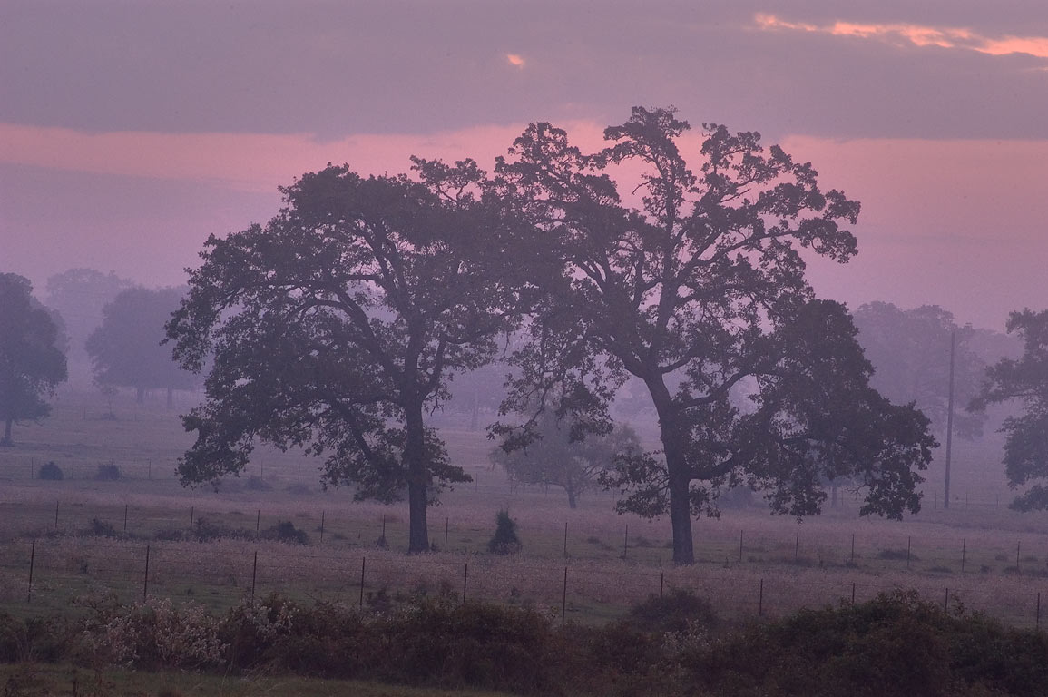 Mist on Bushman's Ranch at morning, view from Rd. 30, east from Shiro. Texas