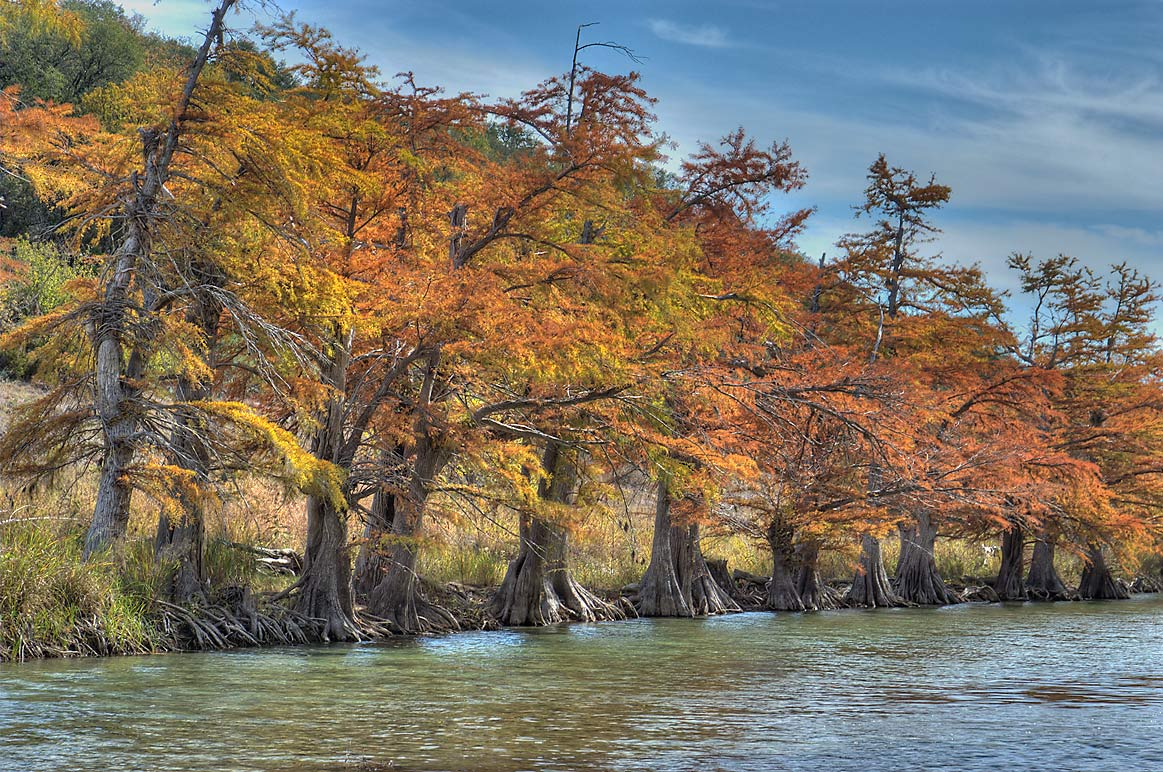 Cypress trees lining Pedernales River below...Falls State Park. Johnson City, Texas