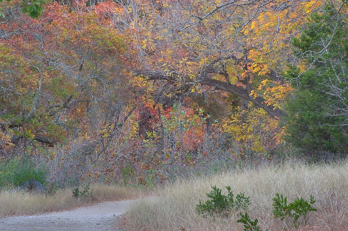 Western section of East Trail in Lost Maples State Natural Area. Vanderpool, Texas