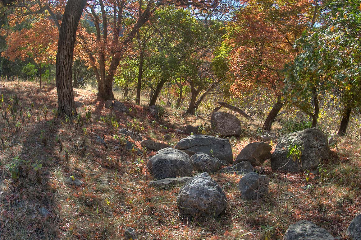 Rocks and trees near western section of East...State Natural Area. Vanderpool, Texas