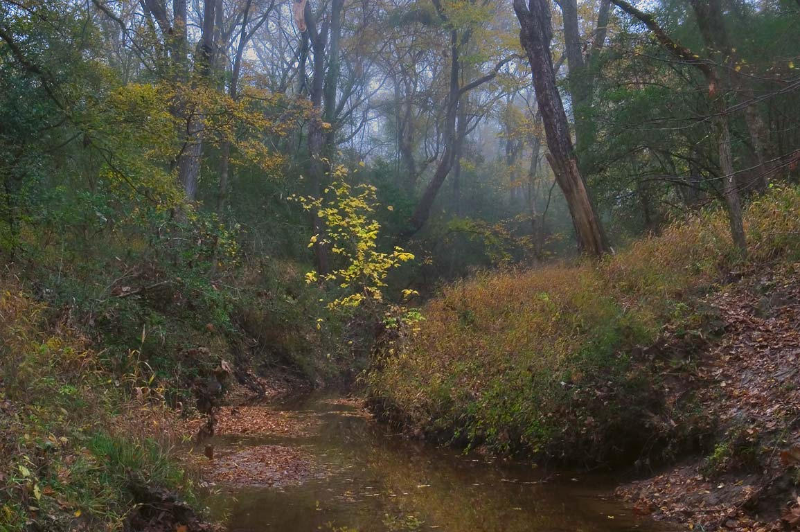 Lick Creek in mist near Iron Bridge Trail in Lick Creek Park. College Station, Texas
