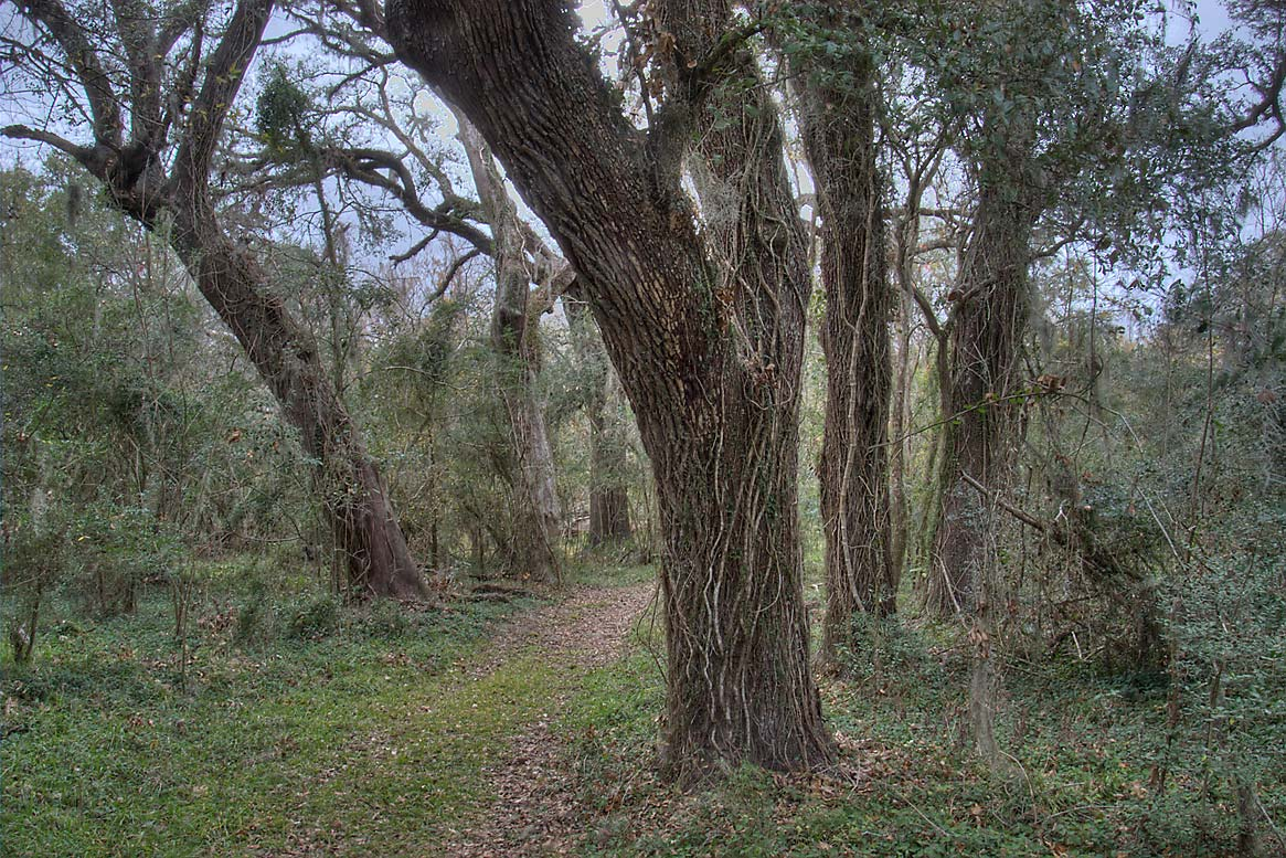 Hoots Hollow Trail in Brazos Bend State Park. Needville, Texas