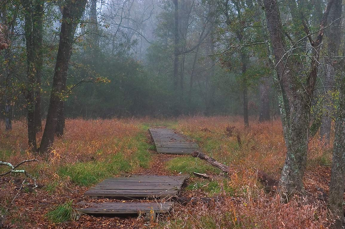 Boardwalk of Racoon Run Trail in Lick Creek Park. College Station, Texas
