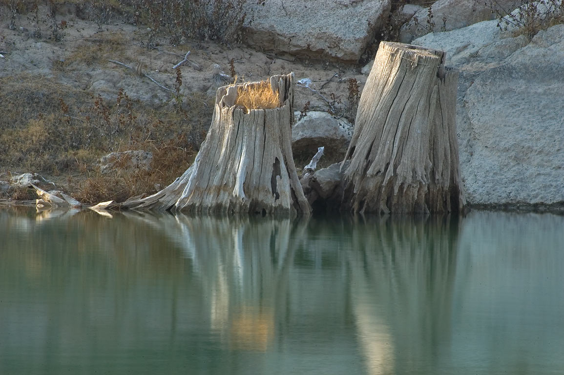 Cypress stump on a shore of Pedernales River in...Ranch park. West from Austin, Texas