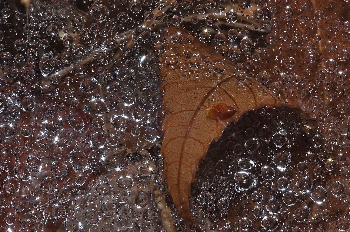 Dew drops on a spider net and a dry leaf on...Creek Park. College Station, Texas
