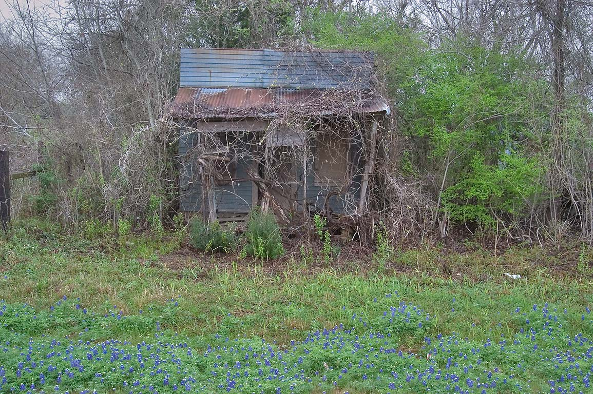 Bluebonnets and an abandoned house on Rd. 912. Washington, Texas