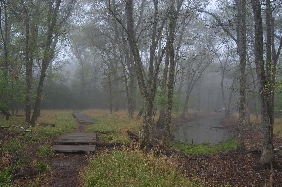 Boardwalk of Racoon Run Trail in Lick Creek Park, in fog. College Station, Texas