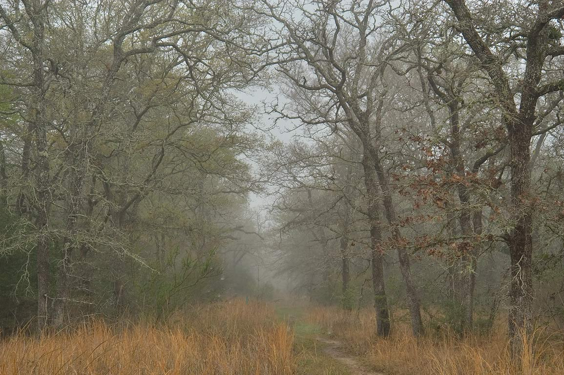 Sewage line right of way in Lick Creek Park, in fog. College Station, Texas