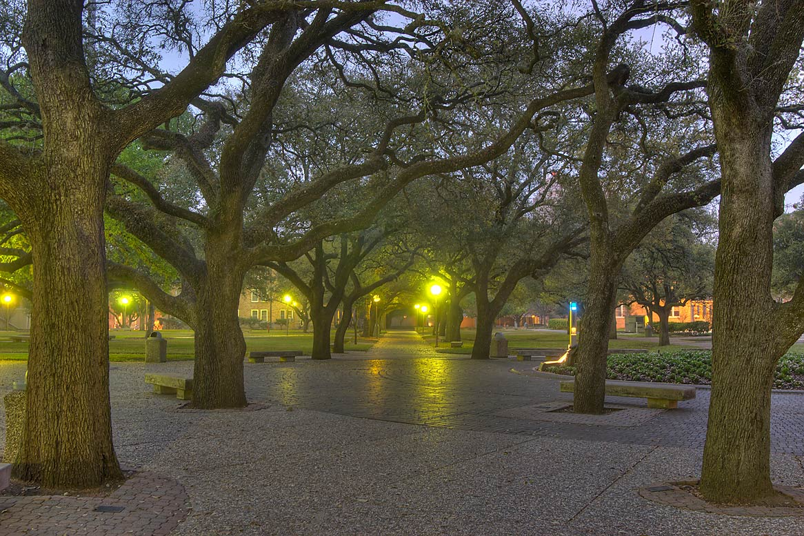 Oak alley of Military Walk at twilight, view from...M University. College Station, Texas