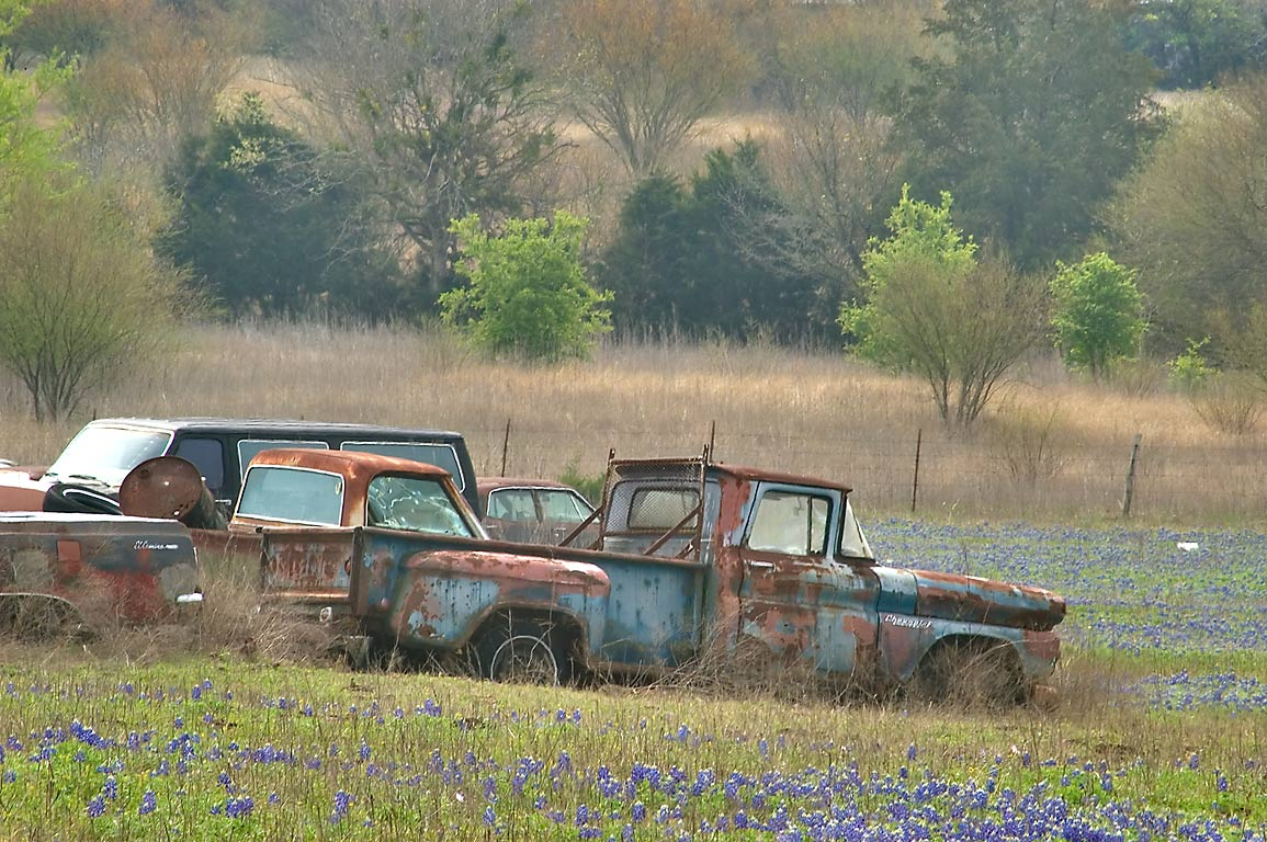 Car junkyard with bluebonnet flowers, view from Airport Rd.. North from Brenham, Texas