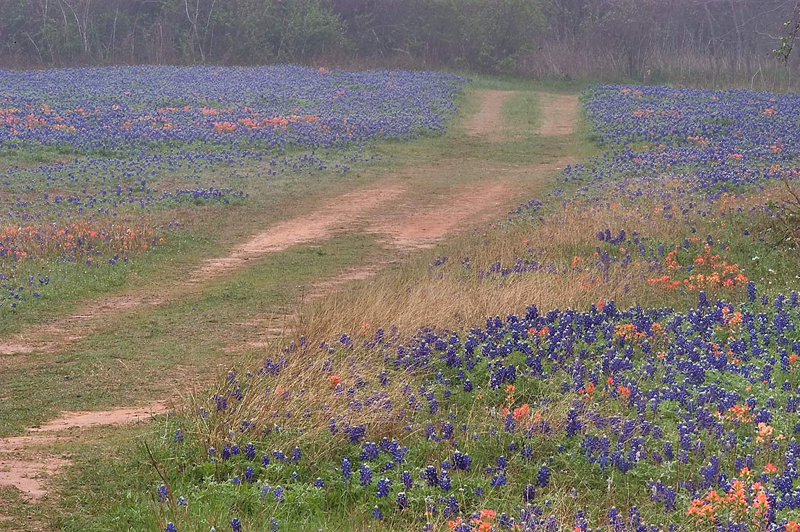 Field of wildflowers at Old Washington Town Site...State Historic Site. Washington, Texas