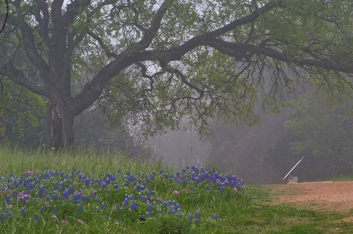 Old Ferry Rd. in mist in Washington-on-the-Brazos State Historic Site. Washington, Texas