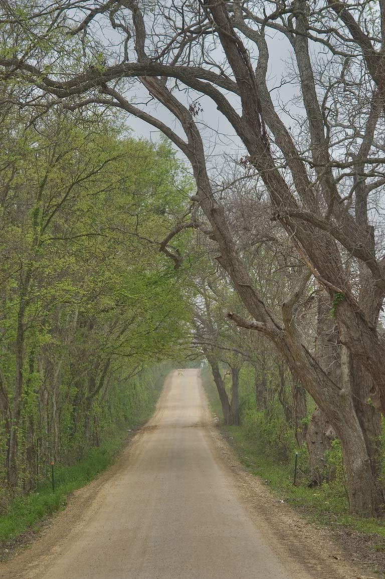 Dallard Road, south from Independence. Texas