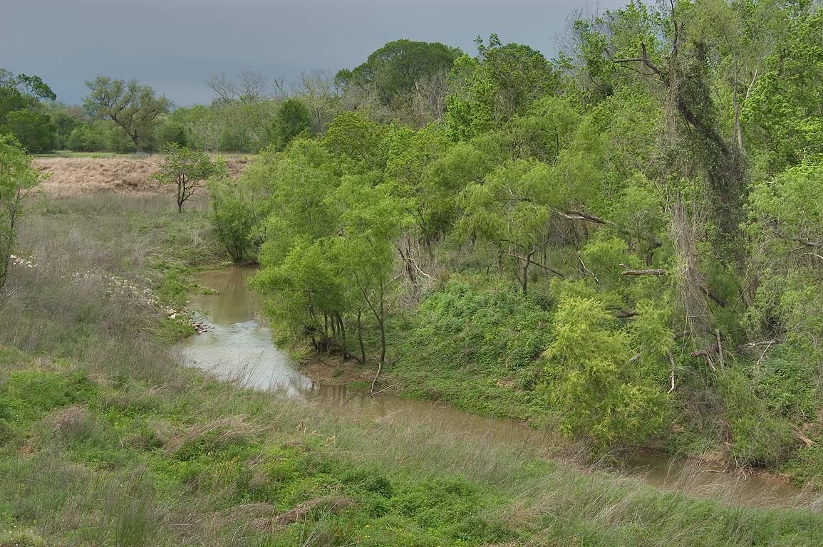 View of Big Creek from Big Creek Loop Trail in Brazos Bend State Park. Needville, Texas