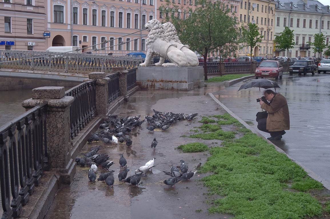 Photographer taking pictures of feeding pigeons...bridge. St.Petersburg, Russia