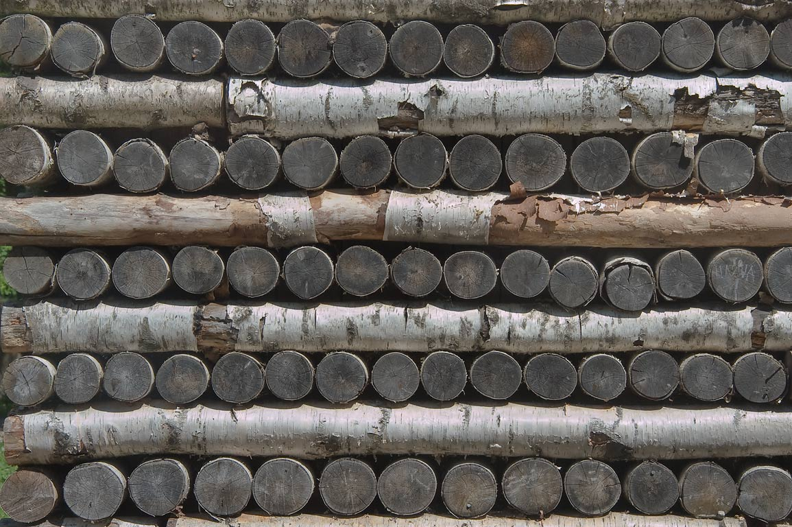 Logs in a wall of Birch House in Gatchina Park...a suburb of St.Petersburg, Russia