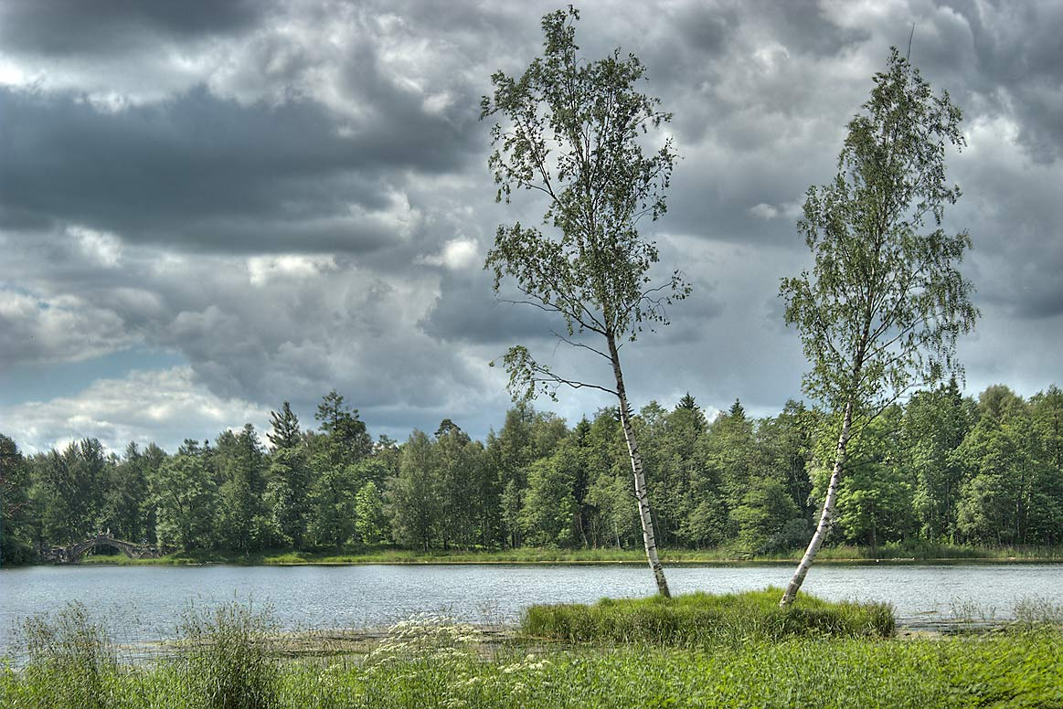 Birch Island near north-east shore of Beloe Lake...a suburb of St.Petersburg, Russia