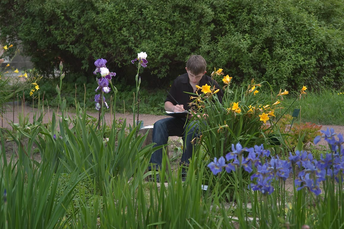 Painting of iris flowers in Botanic Gardens of...Institute. St.Petersburg, Russia