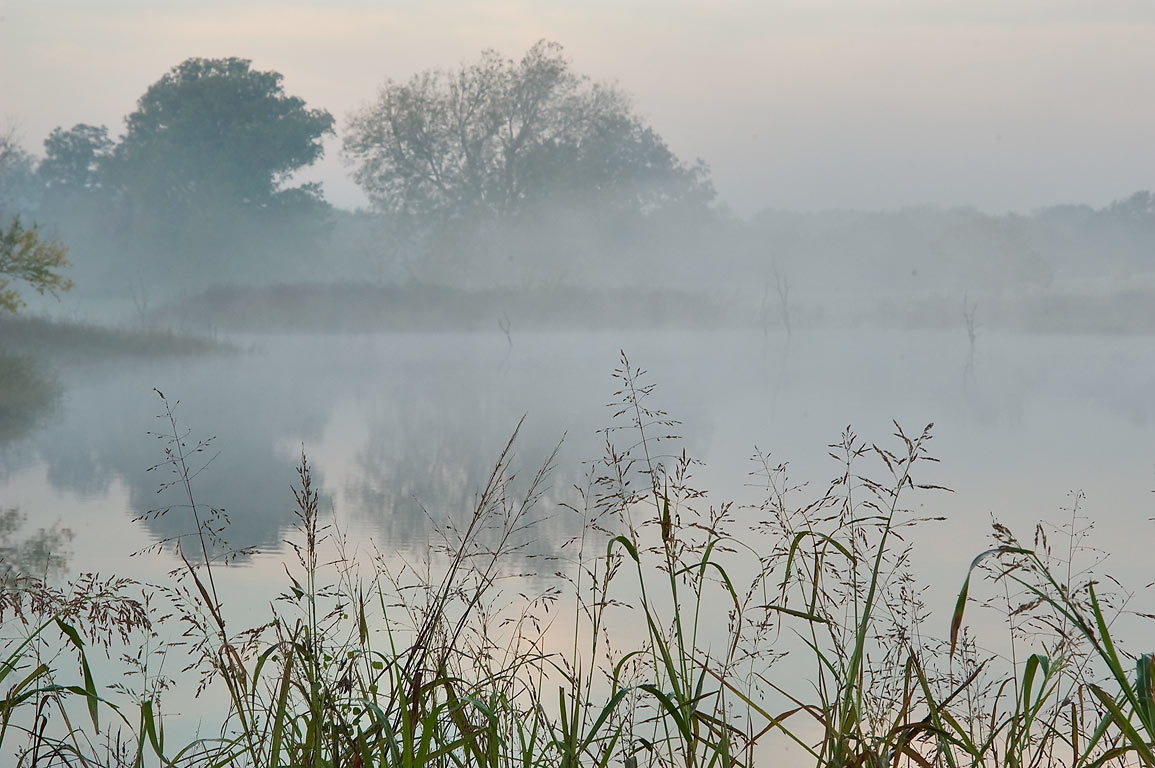 Foggy pond in Washington-on-the-Brazos State Historic Site. Washington, Texas