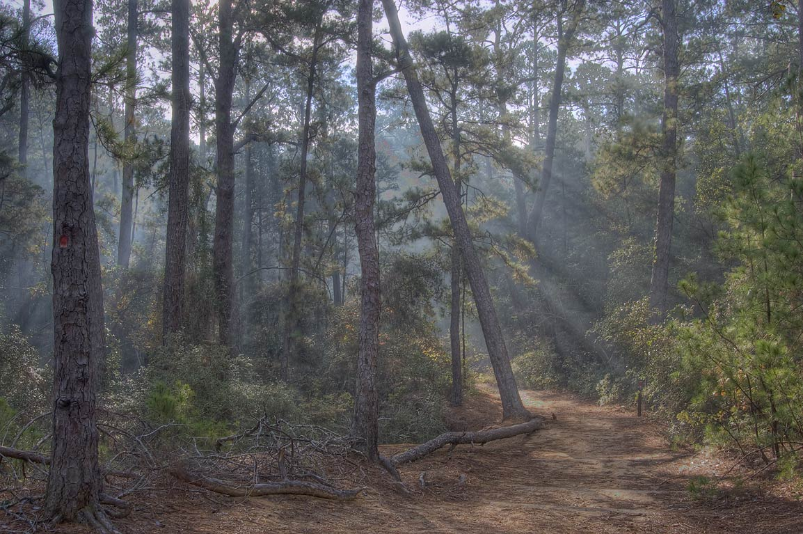 A trail with smoke rising from Piney Hill...Lost Pines State Park. Bastrop, Texas