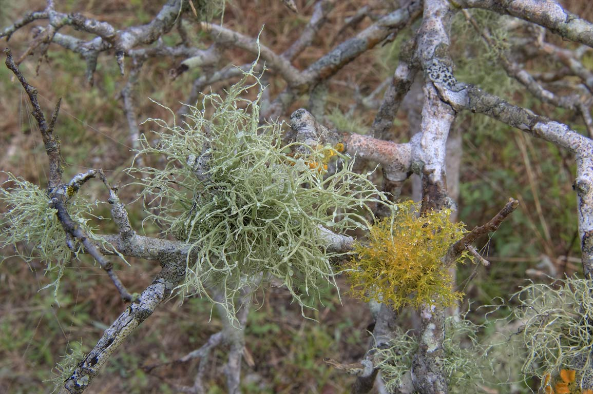 Lichen on loop trail in Washington-on-the-Brazos State Historic Site. Washington, Texas