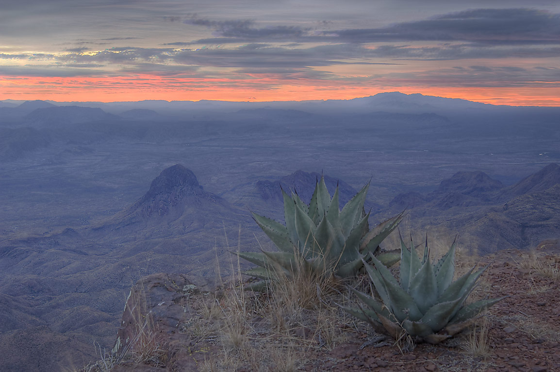 Agaves on South Rim at sunrise. Big Bend National Park