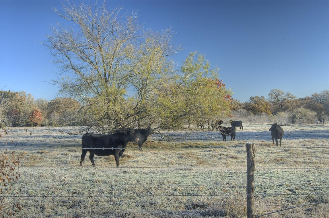 Frozen pasture at Rd. 1687. Bryan, Texas