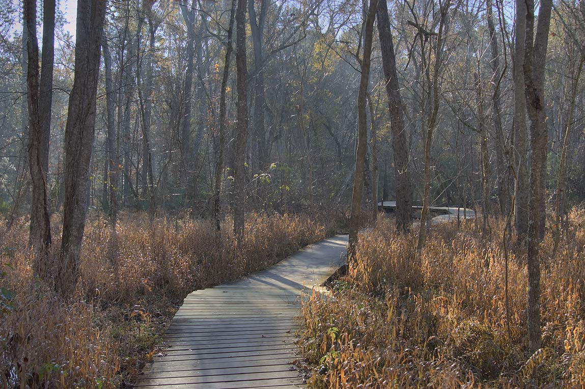 Boardwalk of Chinquapin Trail through Alligator...Raven in Huntsville State Park. Texas