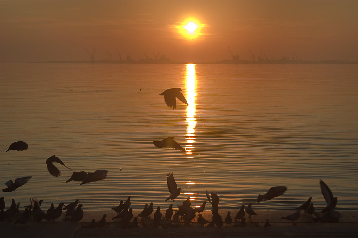 Pigeons on Corniche (seafront promenade) at sunrise. Doha, Qatar