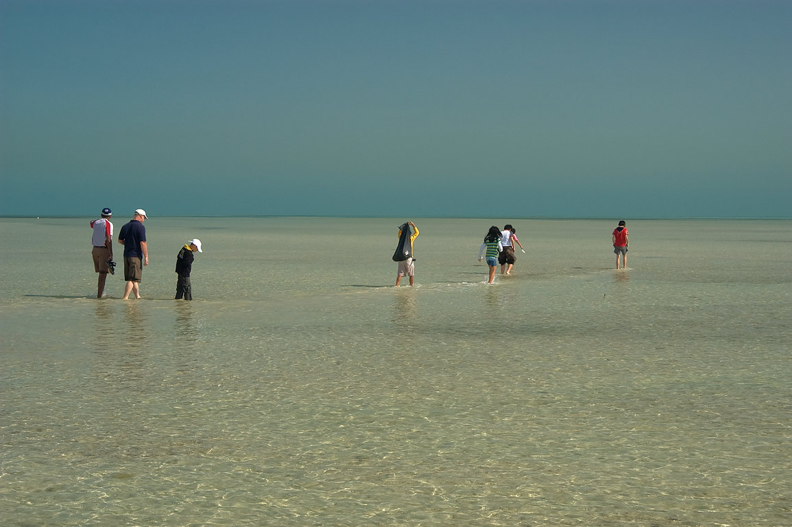 Qatar Natural History Group wading at low tide in...near Mesaieed, north from Doha. Qatar