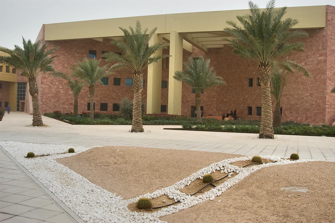 Palms at west entrance of TAMUQ research area...in Education City campus. Doha, Qatar