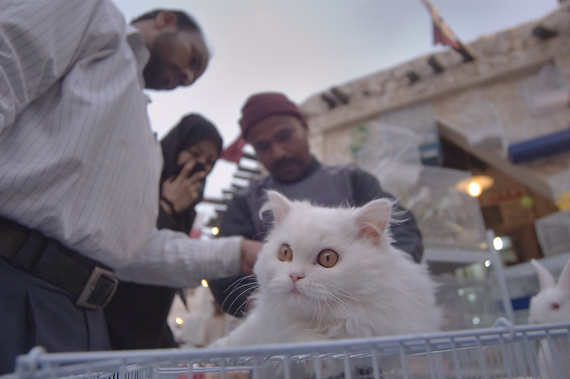 Shopping for pets during dust storm in Souq Waqif (Old Market). Doha, Qatar