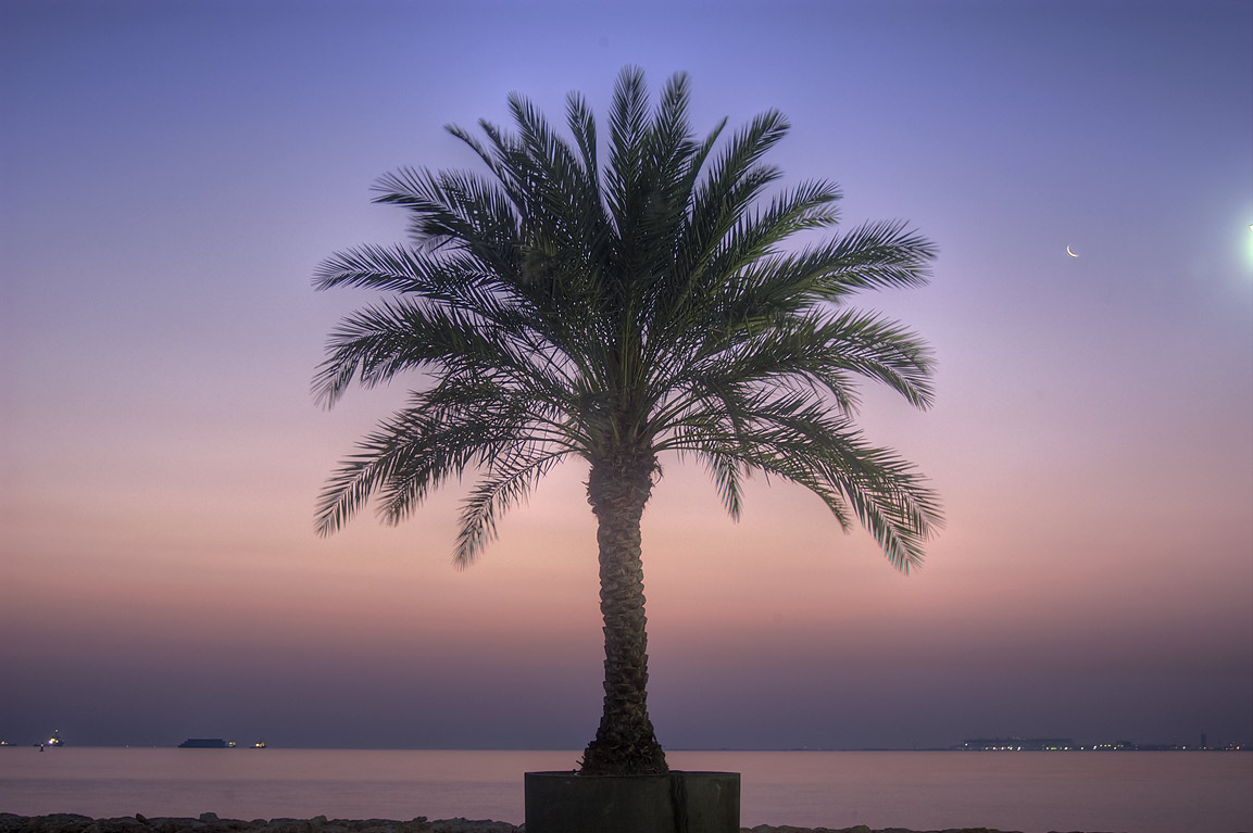 Palm on marina of Four Season Hotel in West Bay. Doha, Qatar